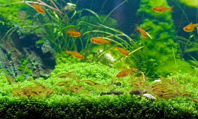 3 Best Algae Eating Shrimp For Freshwater Aquarium Aquascape 2