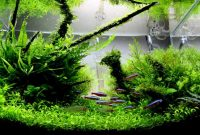 3 Plants are Often Used in the Aquascape