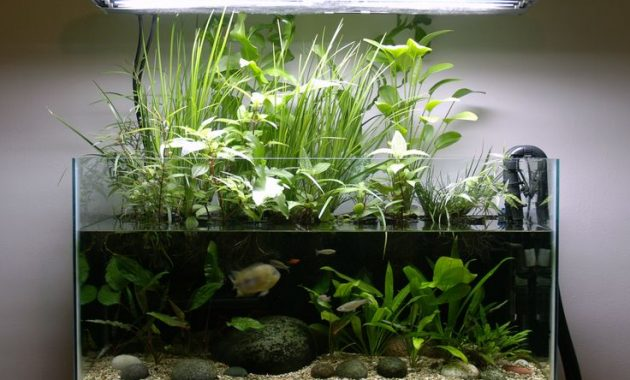4 Benefits of Plants in the Aquascape