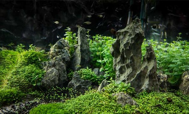 What is the Aquascape?