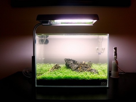 How to Set Up an Simple Aquascape with Iwagumi Style