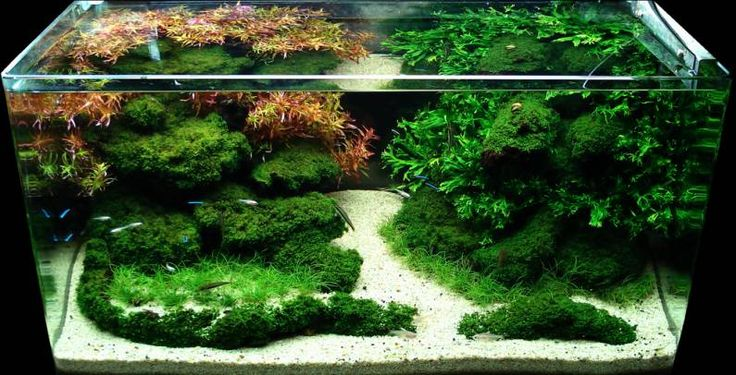 Choose 3 large Moss the Best for Your Aquascape
