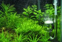 Co2 is an Important Element in the Aquascape