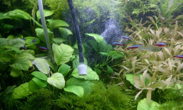 How to Adding CO2 Into the Aquascape