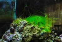 How to Stop Green Hair Algae Growth in a Fish Tank