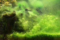 Easy Way to Avoid Excessive Algae in the Aquascape