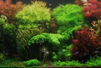 How to Create Aquascape with Dutch Style