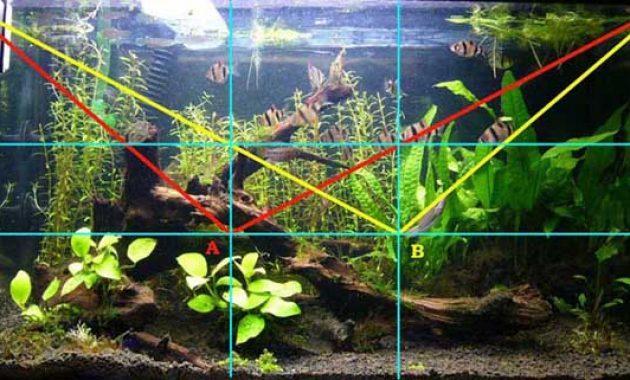 Understanding The Golden Ratio In The Aquascape Aquascaper