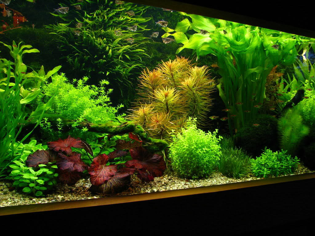 AQUASCAPER