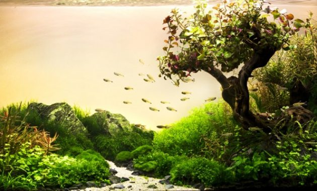 How to Create Aquascape with Natural Style
