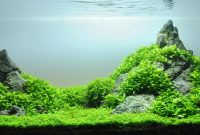 How to Create Aquascape with Iwagumi Style