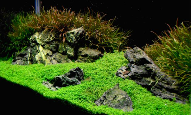 How To Create Aquascape With Iwagumi Style Aquascaper