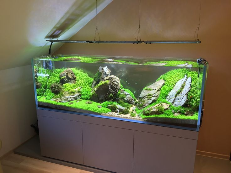 Elegant AQUASCAPER