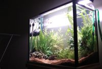 How to Choose the Right Lamp for Lighting Aquascape