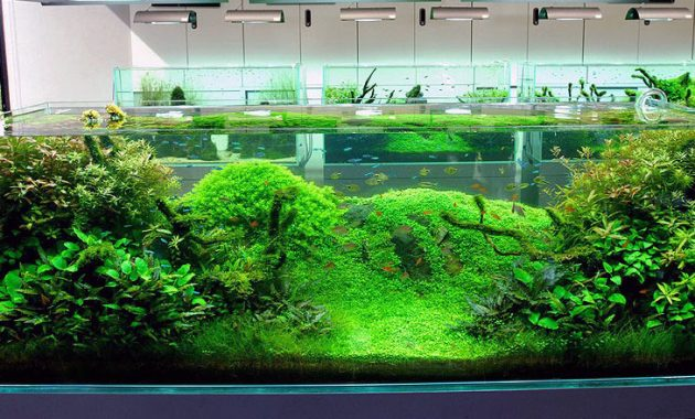 Choosing the Right Fish for Aquascape Nature Style