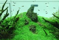 Choosing Plants For Aquascape Nature Style