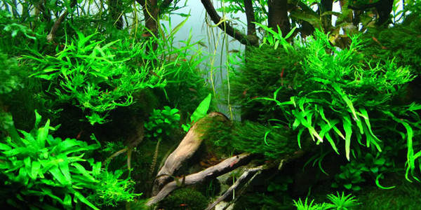 Choosing the Right Fish for Aquascape Style Jungle