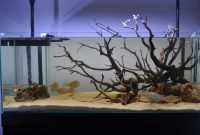 Understanding Hardscape in the Aquascape