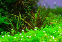 Selecting the Types of Plants for Aquascape