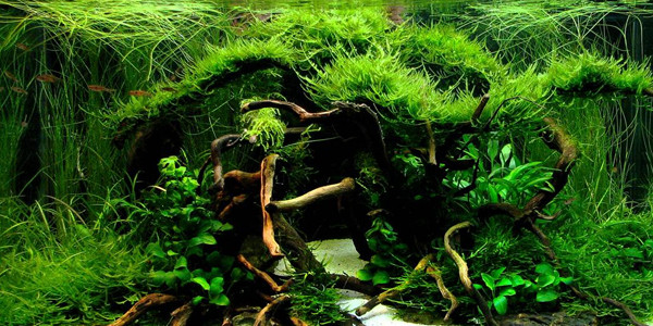 Elegant How To Create Aquascape With Jungle Style