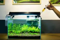 Guide How to Fertilization in the Aquascape