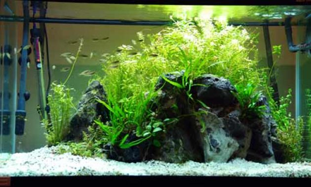 Guide To Making Aquascape For Beginners