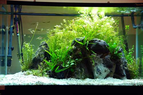 Guide to Making Aquascape for Beginners - AQUASCAPER