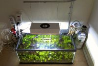 How to Set Up Lighting In the Aquascape