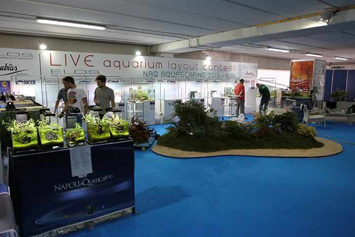 Standard Rating in the Aquascape Contest World