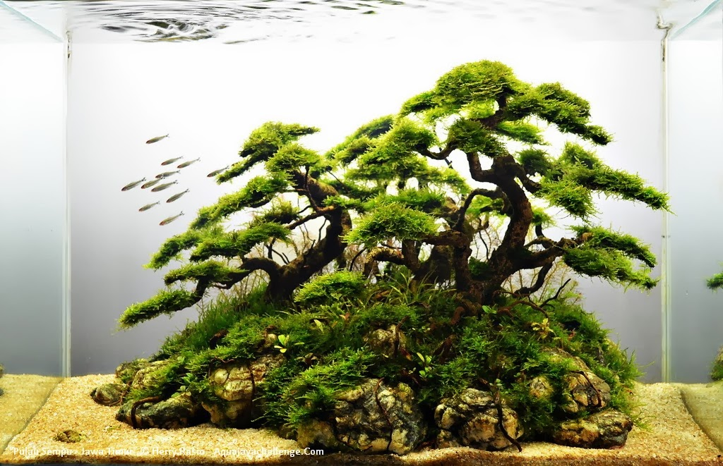 Awesome AQUASCAPER