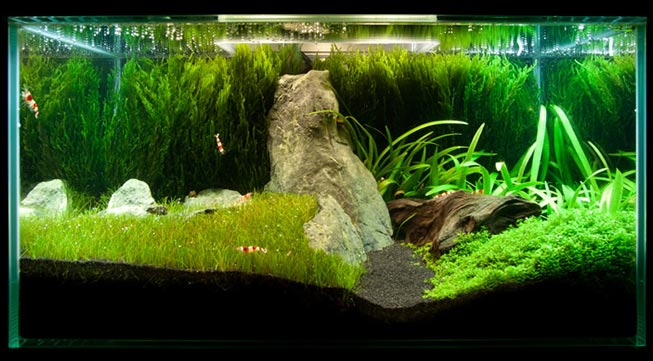 The best 3 low light aquarium plants for beginners for Low maintenance fish tank