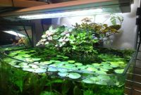 What Use Direct Sunlight Causes Algae in Fish Tank? 2