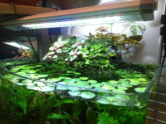 Use Direct Sunlight What Causes Algae In Fish Tanks