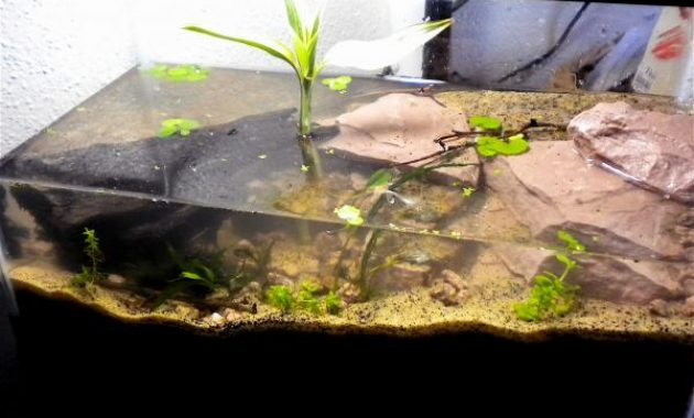The Best Types of Algae Eaters Aquariums: Red Claw Crab 3