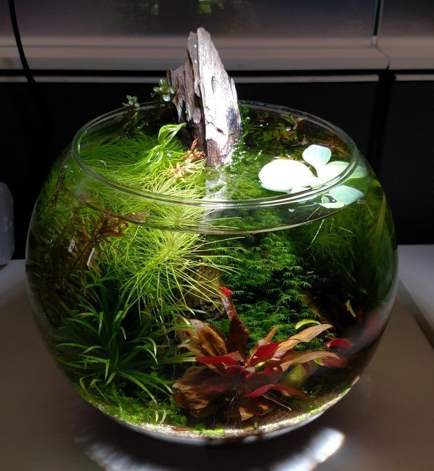 45 Nano Planted Tank Design Inspirations to Displayed at the Office, Rooms, and Living Room That Will Eliminate Your High Stress 12
