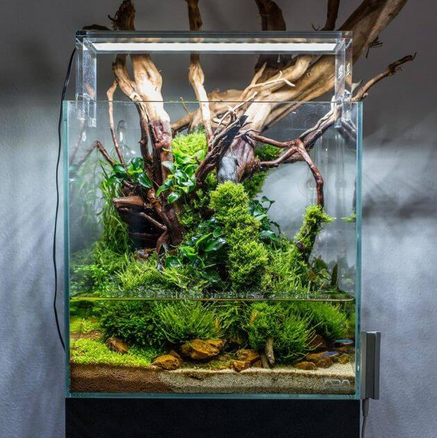 45 Nano Planted Tank Design Inspirations to Displayed at the Office, Rooms, and Living Room That Will Eliminate Your High Stress