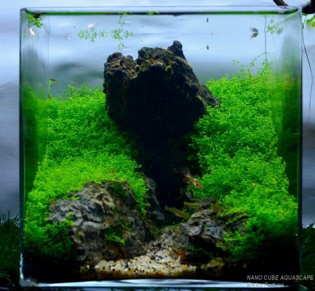 Source: Pinterest.com 45 Nano Planted Tank Design Inspirations To Displayed  At The Office, Rooms, And Living