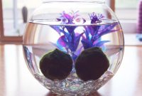 The Easiest Aquarium Plants For Beginner Aegagropila Linnaei Known as Marimo Moss Ball