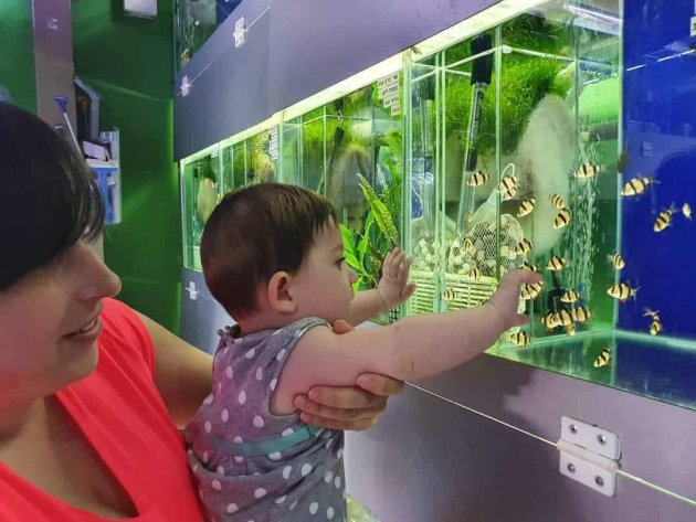 10 Good Reason Why Should Have An Aquarium Fish At Your Home